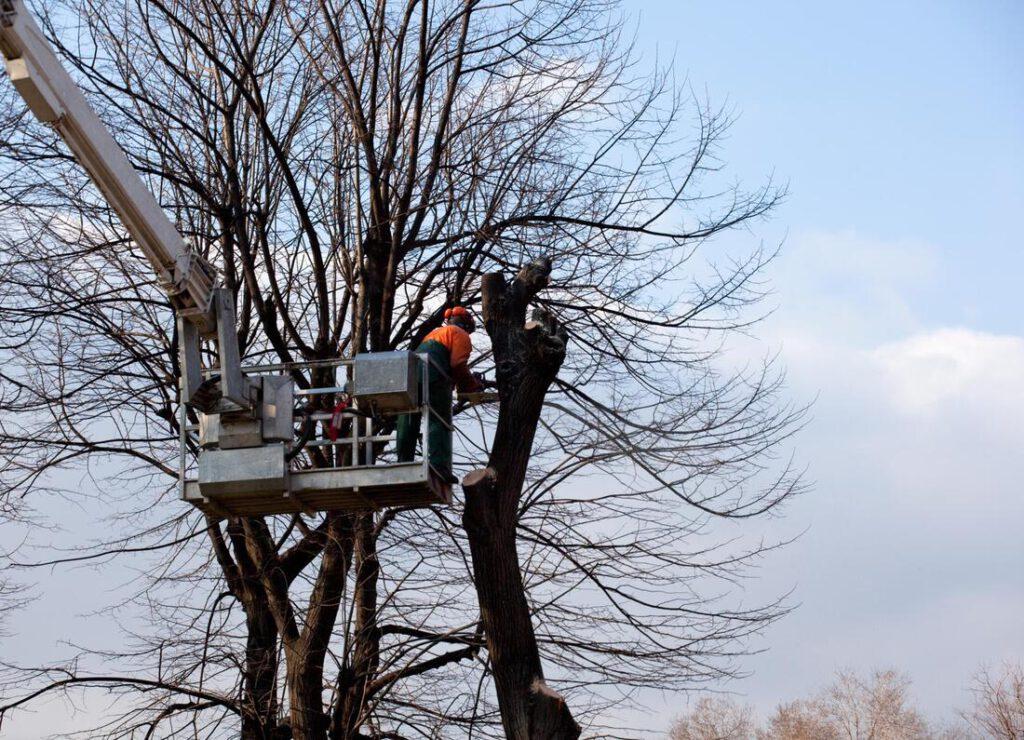 north-richland-hills-tree-service-services_orig