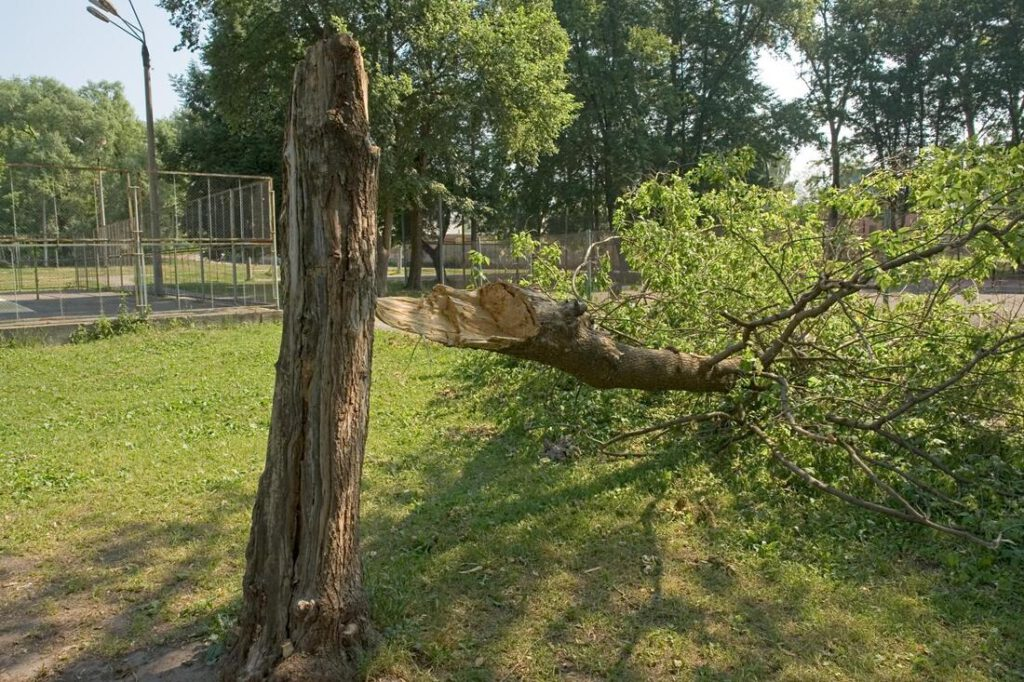 north-richland-hills-tree-service-storm-damage-clean-up-1_orig