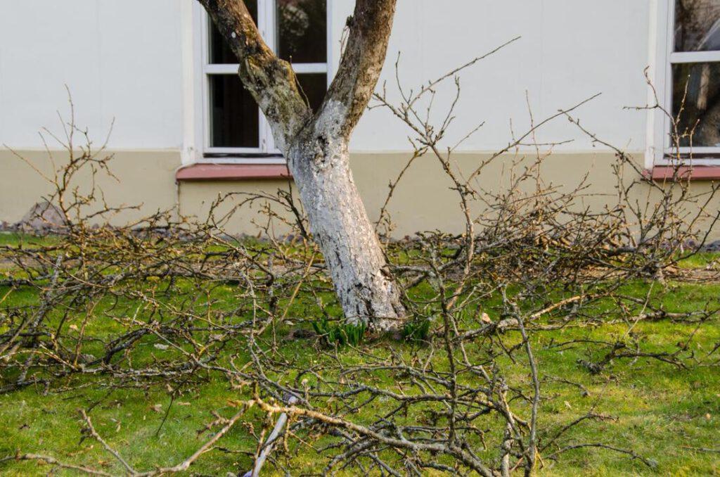 north-richland-hills-tree-service-storm-damage-clean-up-2_orig