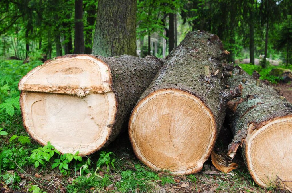 north-richland-hills-tree-service-tree-removal-disposal-1_orig