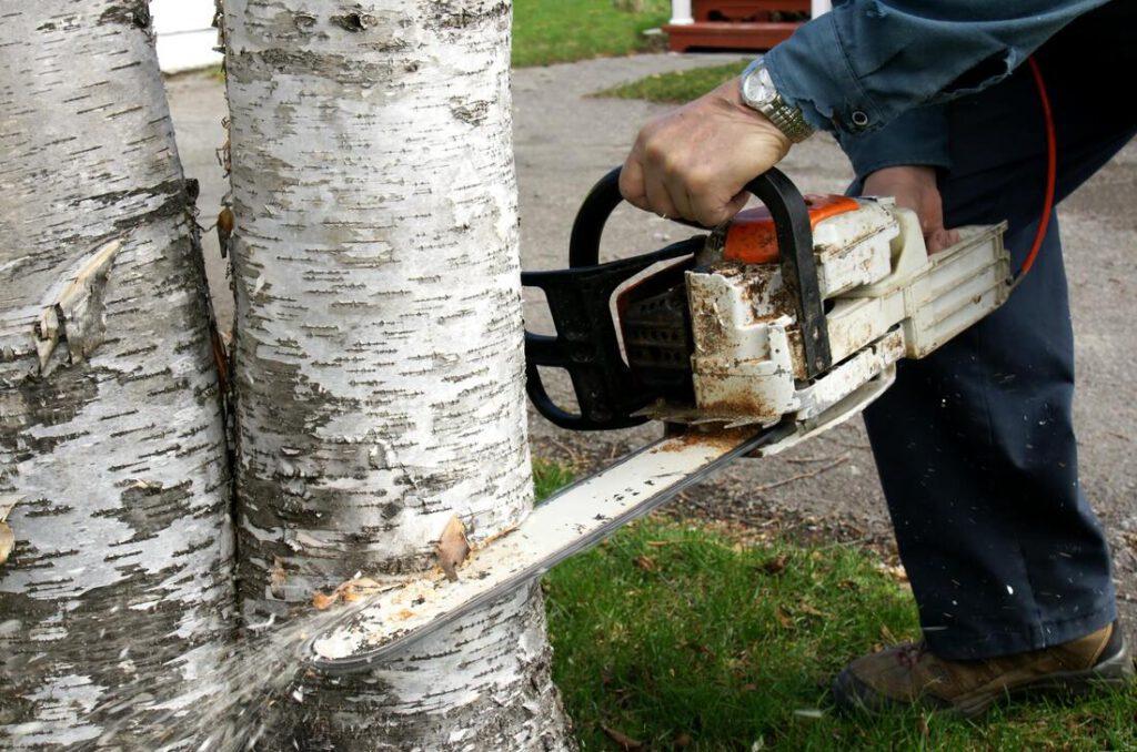 north-richland-hills-tree-service-tree-removal-disposal-2_orig