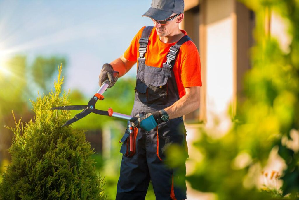 north-richland-hills-tree-service-tree-shrub-trimming-1_orig