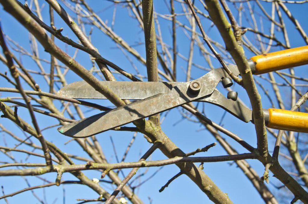 north-richland-hills-tree-service-tree-shrub-trimming-2_orig